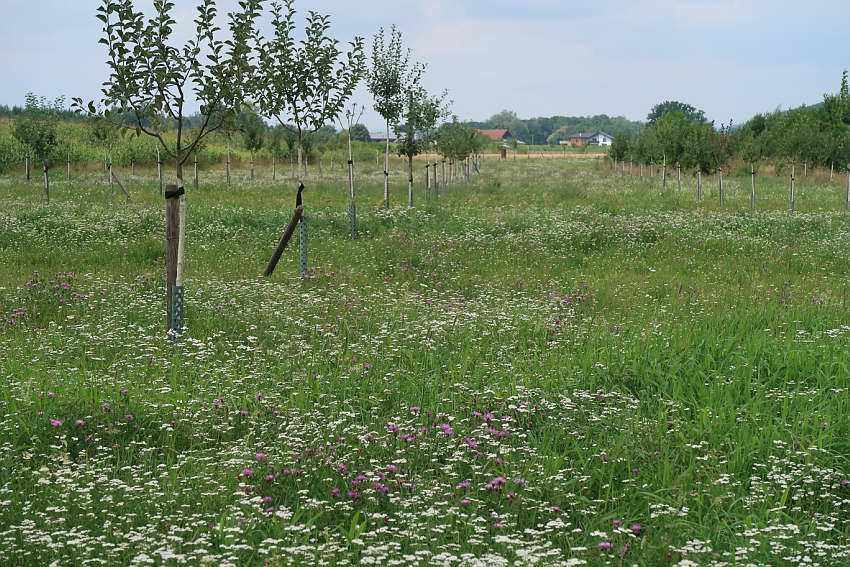 Streuobstwiese-Kraxenberg-1