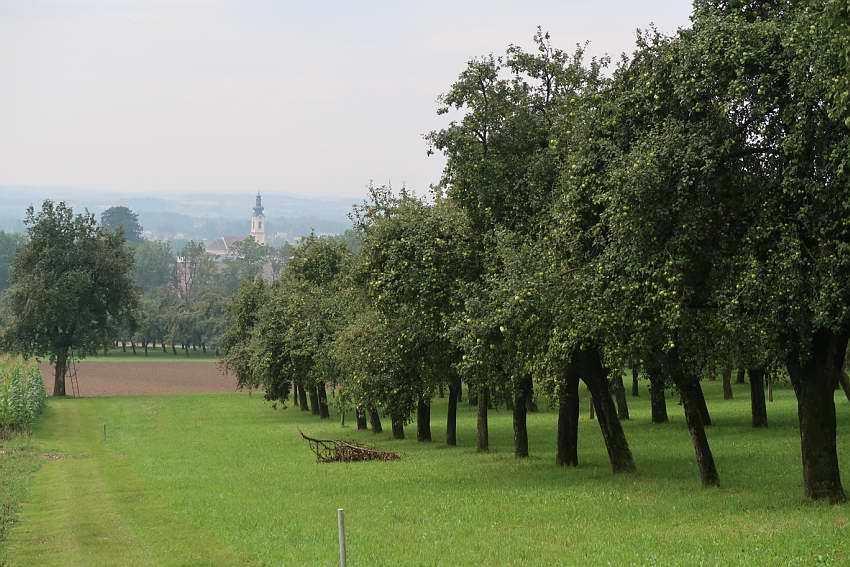 Zell-an-der-Pram-Streuobstwiese4